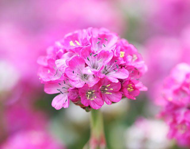 Magic in pink