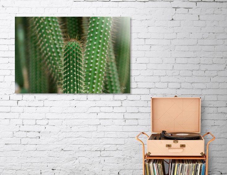 «Cactus 02», Numbered Edition Acrylic Glass Print by VanessaGF . #cactus #photography #prickly  #nature #succulent #artprint #homedecor @Curioos