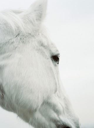 HorsesBeautiful Hors, Head Shots, Hors Pictures, White Horses, Pretty Horses, Art Pictures, Wild Hors, Animal, Snow White