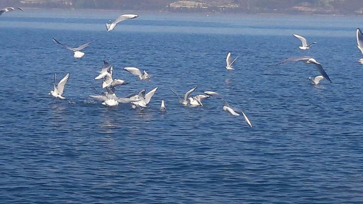 Sapanca gölü  #بحيرة_سبانجا