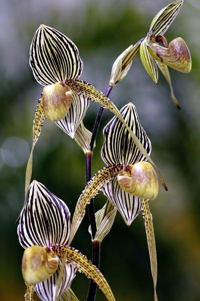 ORCHIDS:  Pretty flowers can be found everywhere in the Dominican Republic. Don't believe me? Check out this photo essay of beautiful flowers found in the DR. http://wetravelandblog.com/2013/travel-photography/travel-photo-essays/flowers-dominican-republic/