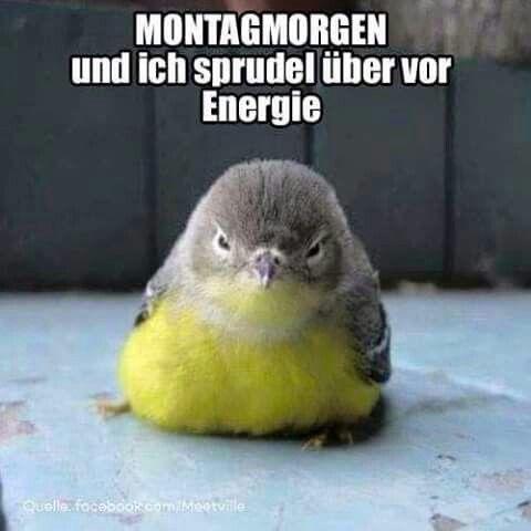 Energie am Montagmorgen.