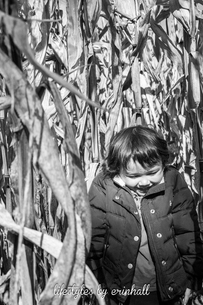 girl in corn