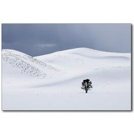 Eenzame boom in Yellowstone door Fred van Wijk