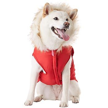 Petco Smoochie Pooch Red Ruffle Dog Jacket at PETCO   My