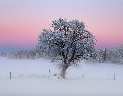 Pink winter wonderland