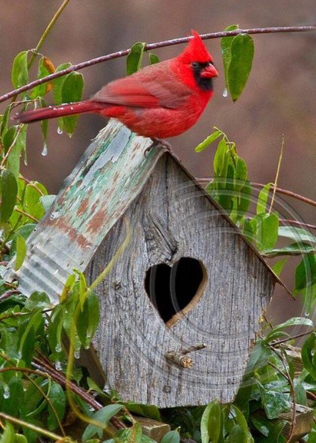 Cardinal house hunting