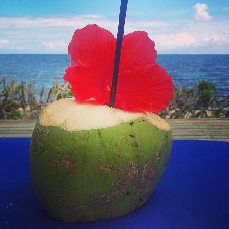 Can I have this now?  Fresh #coconut water with a pretty #hibiscus flower (the setting isn't too shabby either). sigh #coconutwater #belize #babygotbalance #stayhydrated #BGB #placencia #belizetravel #vegan #plantpowered #bgbtravel #freshfood #rawfood #yummy #placenciabelize #turtleinnbelize #beachlife #centralamerica #fbf #flashbackfriday