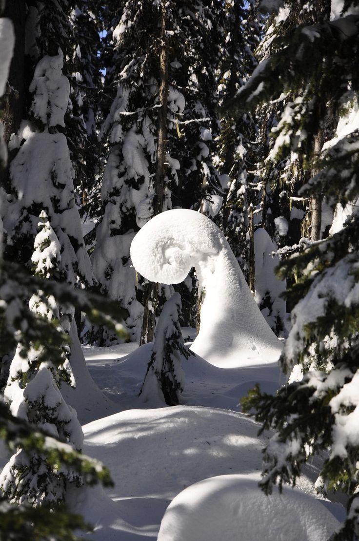 Tree at Big White, BC
