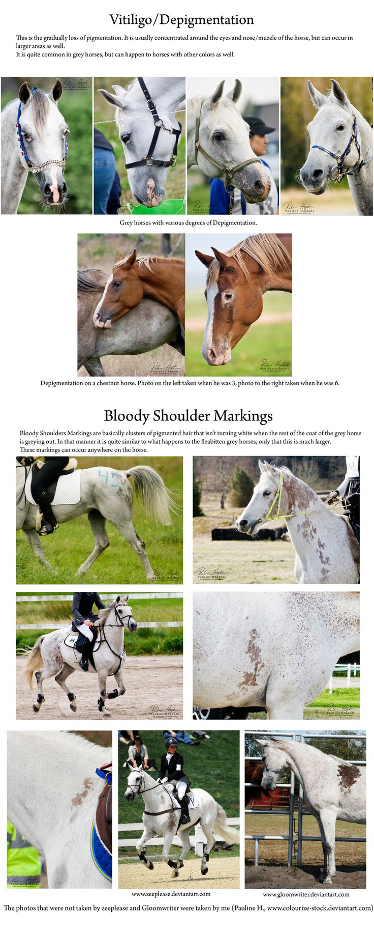 99 best pelajes de los caballos images on pinterest beautiful vitiligo and bloody shoulder markings by colourize stock on deviantart color chartsshouldergeneticshealthbeautiful horsesdeviantartanimalpretty nvjuhfo Choice Image