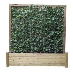 Plantenbak met hedera klimplanten. Toepasbaar als balkon of terras afscheiding of tuinhekken in uw tuinafscheiding.