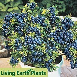 248 best images about plants for zone 2 3 on pinterest - Planting fruit trees in the fall a garden full of vigor ...