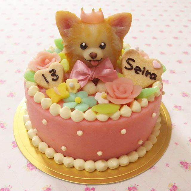 @yuca.yuca さんちのセーラちゃん🎀✨ お花畑のお姫様👑とにかくガーリー💕 #chihuahualover#chihuahuamania#cake#dogcake#dogsweets#decorationcake#birthdaycake#バースデーケーキ#誕生日ケーキ#オーダーメイドケーキ#犬用ケーキ#デコレーションケーキ##わんこ#愛犬#立体ケーキ#チワワ#チワワ部#チワワ大好き#チワワラブ#ちわわ#ロングコートチワワ#ロンチー