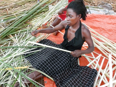 This lovely young Ugandan woman is stripping papyrus plants for fiber. Papyrus is plentiful, and grows back when cut.  It is highly absorbent, the best material social entrepreneur and engineer Dr. Moses Kizza Musaazi has found to manufacture inexpensive sanitary napkins.  His design lasts 12 hours, ideal for girls who have long walks to school with no place to change their pads.  His product, MakaPads, provides employment for women in refugee camps.  Ten cost 65 cents, less than $1.