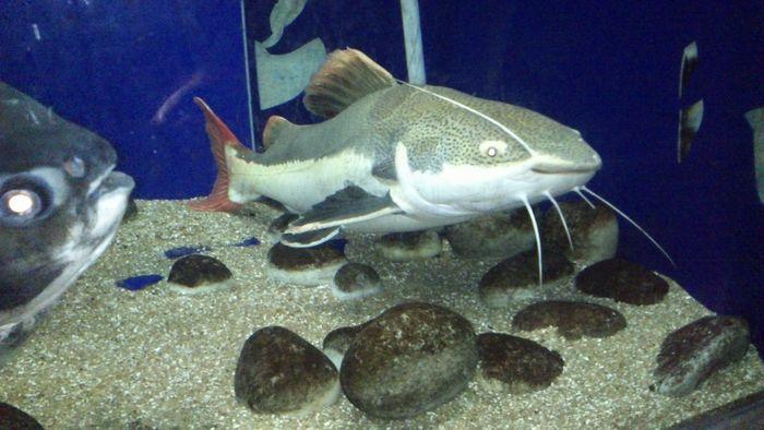 #Matsyadarshini Aquarium - Visakhapatnam