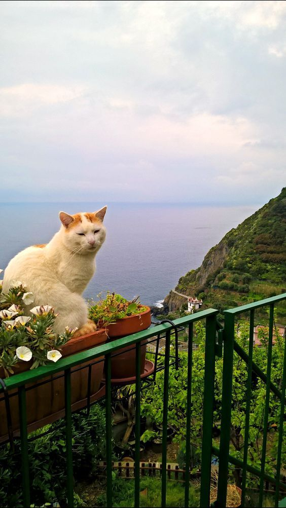 Reisebilder von Katzen – Cats Of Italy
