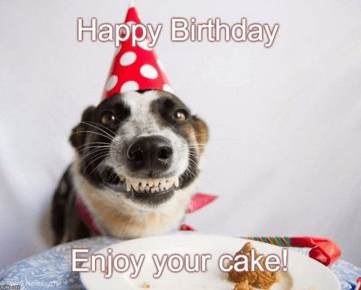 Funny Happy Birthday Pictures With Dogs