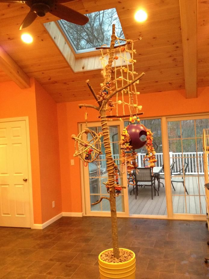 homemade play stand parrot | Tree Stands - Parrot Forum - Parrot Owners Community