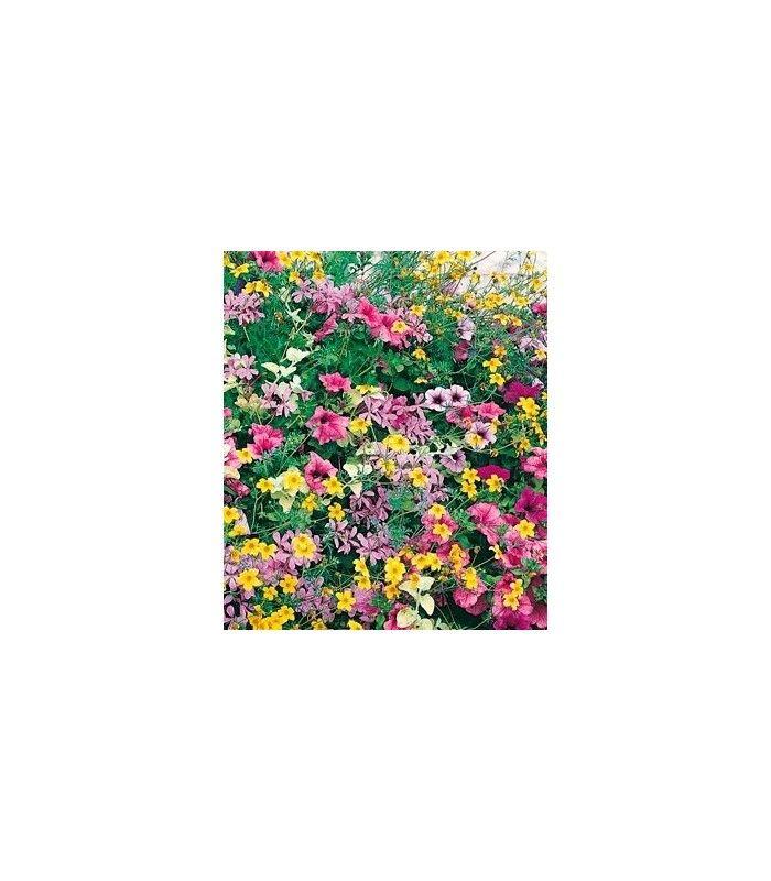Letničky směs - Visuté zahrady - popínavé rostliny - prodej semínek - okrasné rostliny