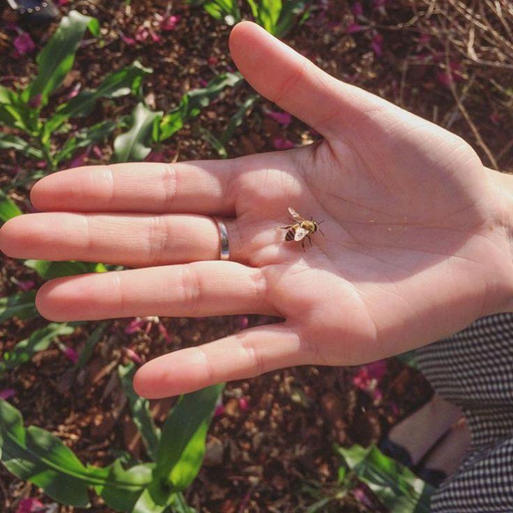Lilian, a encantadora de abelhas 🐝✨🐝✨🐝✨🐝 // photo: Lilian Larrañaga