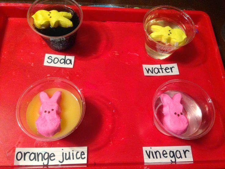 Teaching Munchkins: Peep Science Experiment