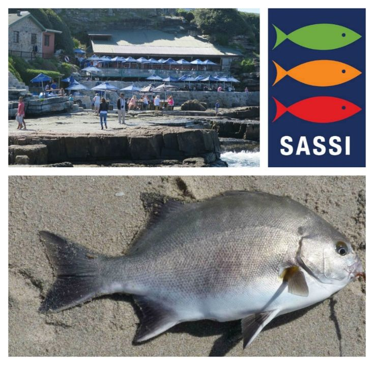 SASSI - Know which fish you should be eating and which you should protect download the SASSi app here:  http://www.sassiapp.co.za