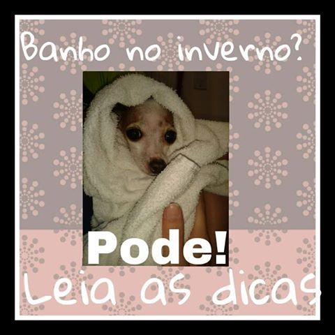 veja mais em www.facebook.com.br/pelepetdermatologistaveterinario