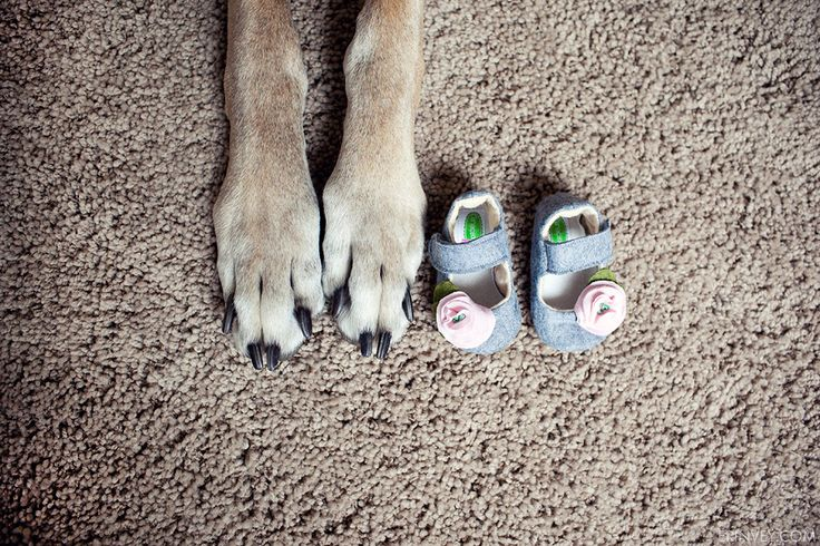 so cute!: Dogs Lined, Photo Ideas, Baby Announcements, Cute Baby Shoes, Dog Photography, Annie S Photography, Baby Photos, Pregancy Photos, Photography Board