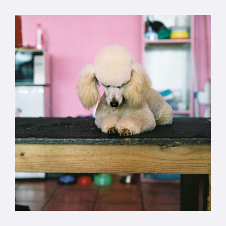 Photograph by Danielle Bischoff: Whiskers Dog Parlour in Fish Hoek