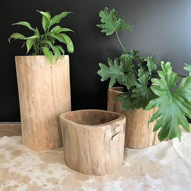 New Teak Planters - available in 3 sizes - in stock. #sataraliving #planters #indooroutdoor #interiordecor #outdoorroom #propertystylist #propertystyling #cowhiderug #teakfurniture #interiordesignideas #homestyle #homedecor #homewares