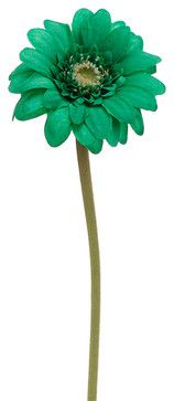 Silk Plants Direct Gerbera Daisy (Pack of 12) - Green Emerald traditional-artificial-flowers-plants-and-trees