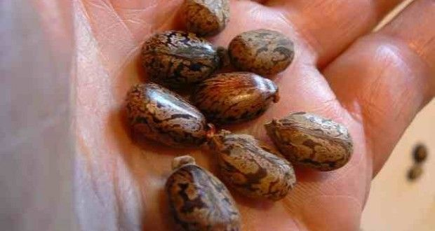 Castor Oil Packs: Find out Benefits and Applications