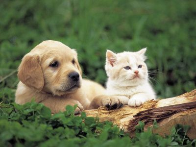 Cute Baby Kittens Puppies On Pictures Of And Together