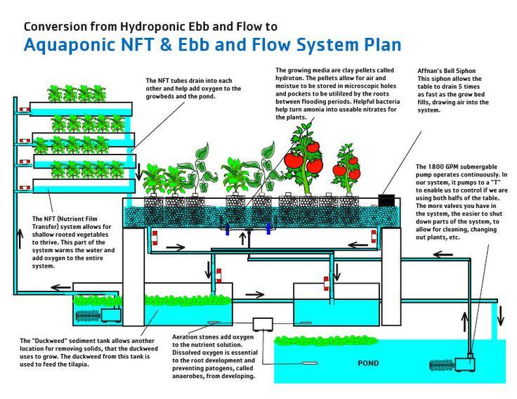 Aquaponic Equipment Plans : Diy Aquaponics Systems Can Help You Eat Healthier
