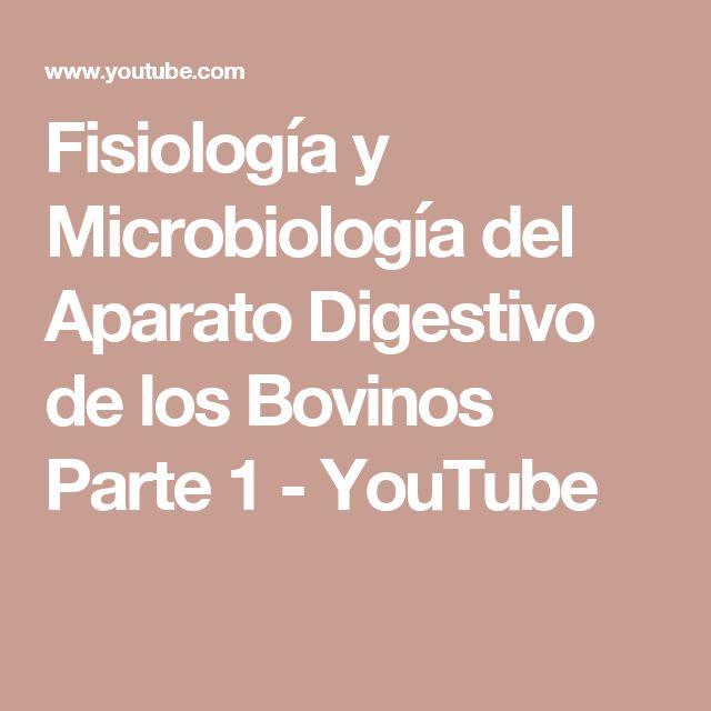 Fisiología y Microbiología del Aparato Digestivo de los Bovinos Parte 1 - YouTube