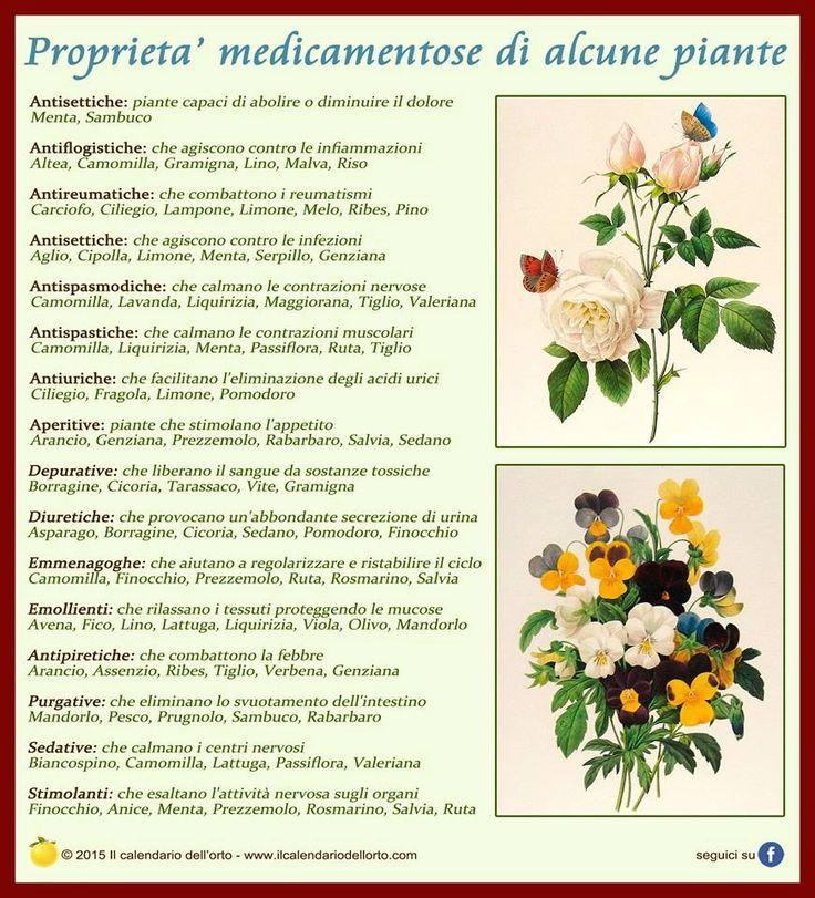 Il Calendario dell'Orto | Usi e consumi