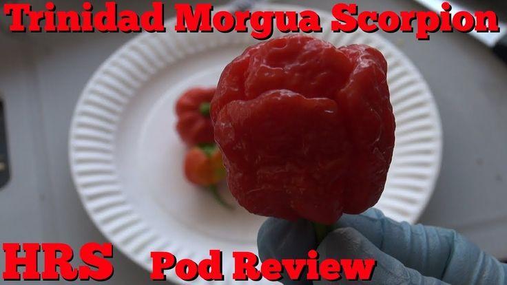 ⟹ Trinidad Scorpion Moruga Pepper, Capsicum chinense, pod review 2018