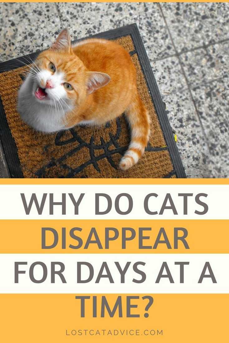 Why Do Cats Disappear For Days At A Time Lost Cat Advice Cat Advice Lost Cat Cats