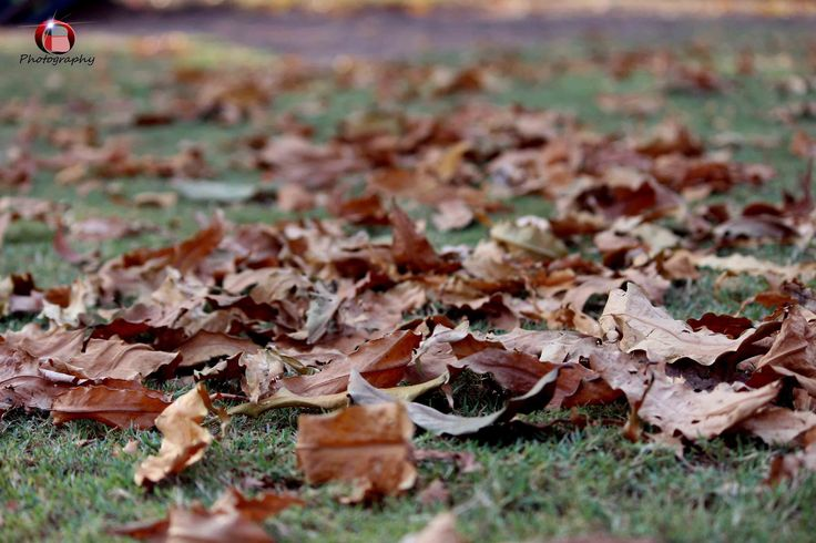 what if trees refused to let go of their dying leaves