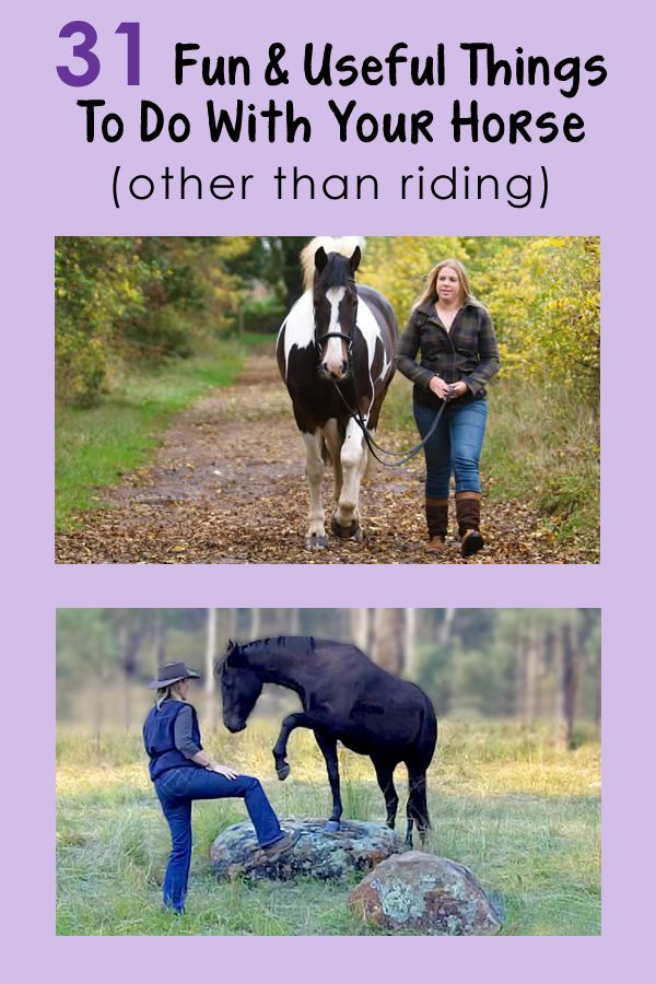 31 Fun & Useful Things To Do With Your Horse (other than riding):