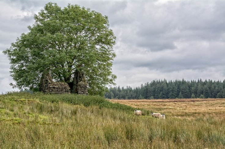 The Old Homestead, Co.Antrim