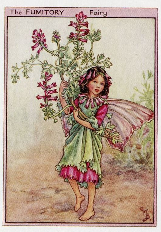 Fumitory Flower Fairy Vintage Print c1950 Cicely by TheOldMapShop