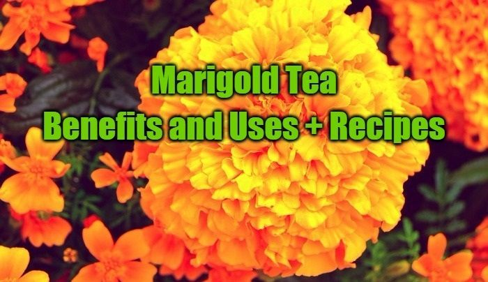 Marigold Tea: Amazing Benefits and Uses + Recipes
