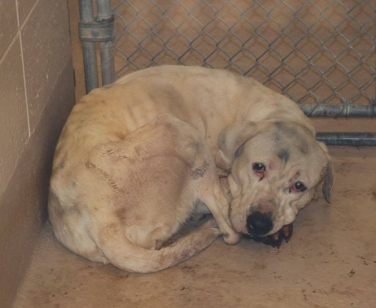 Urgent dogs at county animal helping animals