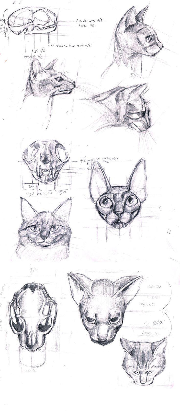 51 best creacion en proceso images on Pinterest | Animal anatomy ...