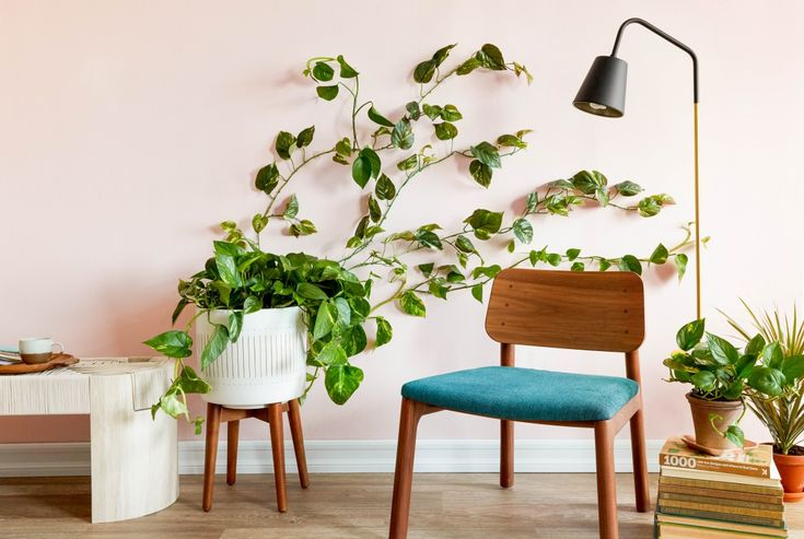 Make a removable living greenery wall using a pothos vine or other house plant and Command Mini Hooks. #sponsored #CommandBrand