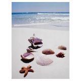 ......: At The Beaches, Sea Shells, Life A Beaches, Beaches Life, The Ocean, Beaches Scene, Seashore Shells, Beaches Stuff, Anna Maria Islands