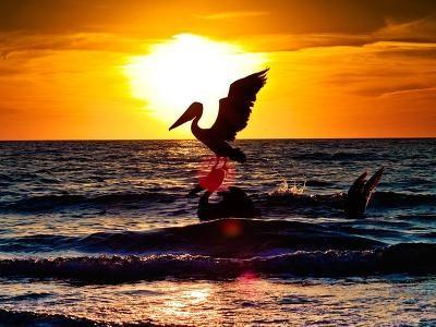 Pelican Sunset: Glorious Sunsets, Sea Sunset, Pelican Sunset, Beautiful Sunsets, Photo, Birds Sea