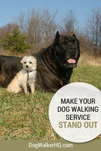 How to Stand Out From the Crowd with your Dog Walking Service