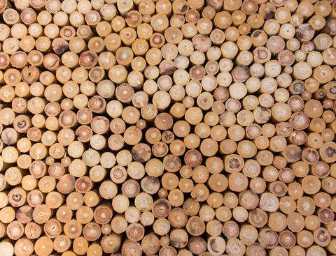 Agder Wood var startskuddet, nå begynner jobben